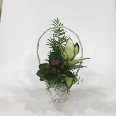Cesta de mimbre blanca con plantas
