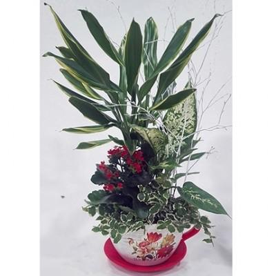 Centro de plantas en taza de ceramica pequeña, (color de la taza y variedad de la planta, según stock)