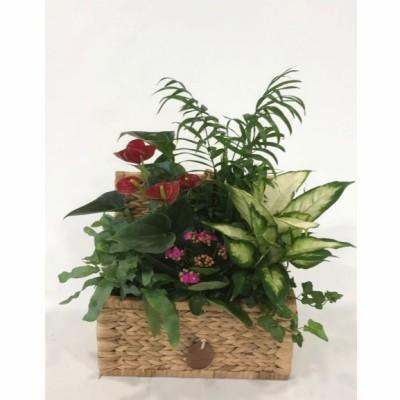 Baúl de junco con plantas