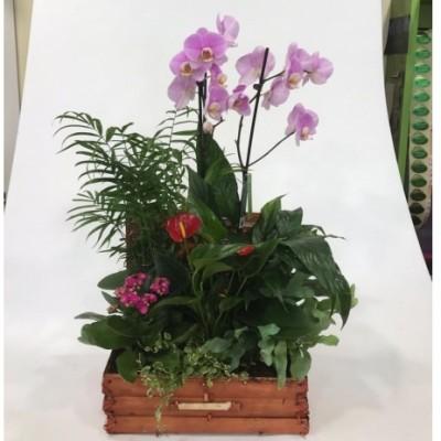 Arcón de Minbre plantas y Orquídea rosa