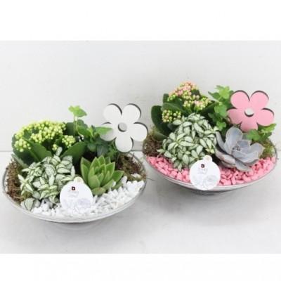 centro de mesa en plato de cristal con plantas variadas
