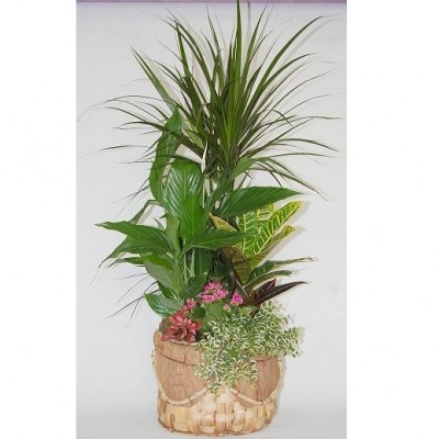 Centro de flor variada en base de coco