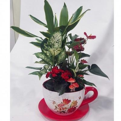 Centro de plantas variado, en taza de ceramica (color de la taza y plantas, según stock)