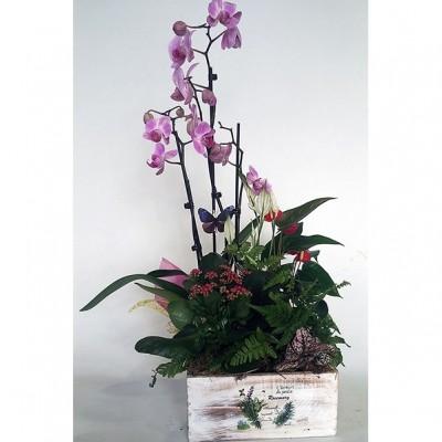 Centro de plantas variada con orquídea, (base y planta según temporada)