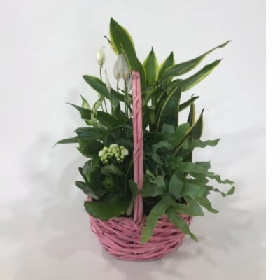 Cesta de mimbre en rosa con plantas