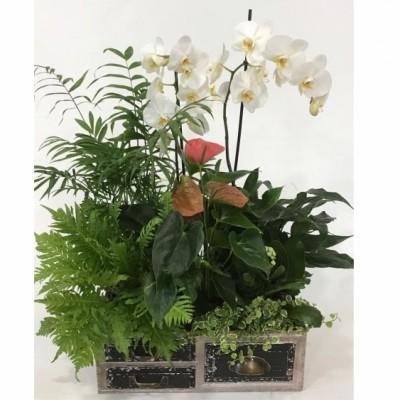 Cajon de madera con plantas y Orquídea en blanca