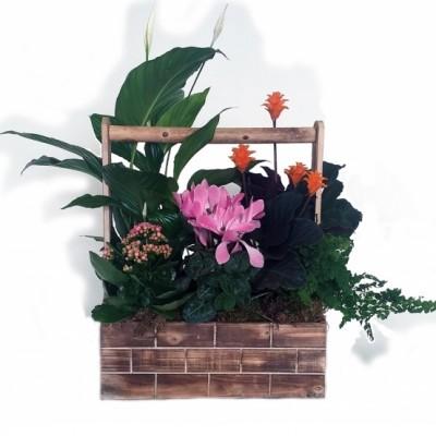 Centro de plantas variada (variación en planta y base, según stock)