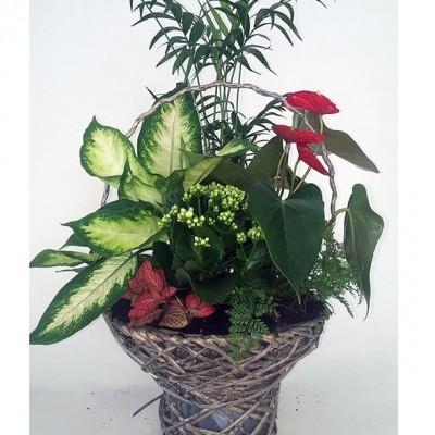 Cesta de plantas variada, (según stock)