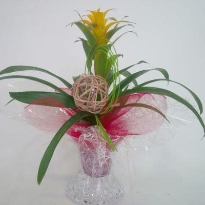Planta de guzmania en jarrón de cristal