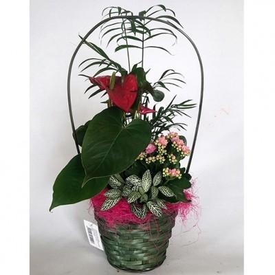 Cesta de plantas variadas pequeña (cesta de mimbre, según stock)