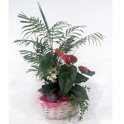 Centro de plantas variadas (base y plantas según temporada)