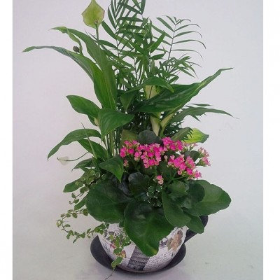 Centro de plantas en taza de ceramica