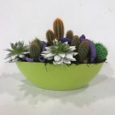 Centro de cactus base pistacho