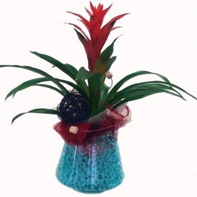 Planta de Guzmania preparada en cristal, con decoración de gelatina