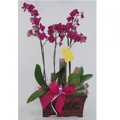 Centro de flor natural, compuesto por dos orquídeas, (solicitar preferencia de color, al hacer el pedido)